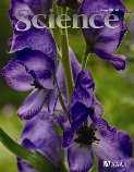 Evolution and Development of Inflorescence Architectures