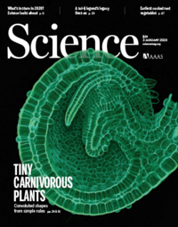 Evolution of carnivorous traps from planar leaves through simple shifts in gene expression